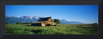 John Moulton Barn in field with bison