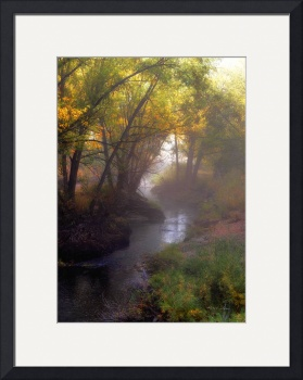 Stream in Fog by Kelly Jones