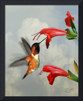 Rufous Hummingbird and Wild Flower