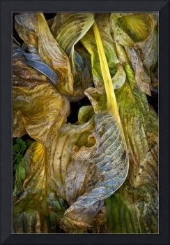 Baroque Wilted Leaves