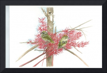 Gold and Ruby Crowned Kinglets