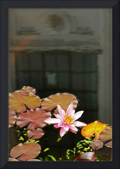 Reflections On A Lily Pond #2