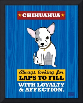 Chihuahua Royal/Red