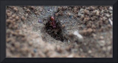 Ant In Hole