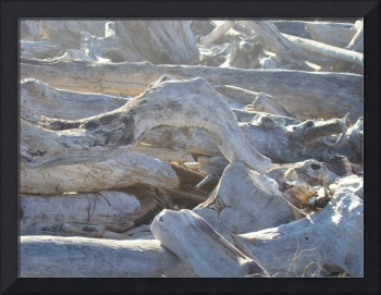 Coastal Driftwood art prints Morning Light