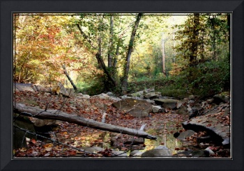 creek bed in the fall
