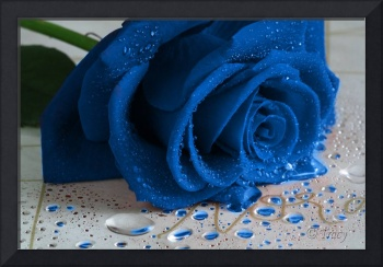 The Magical Blue Rose
