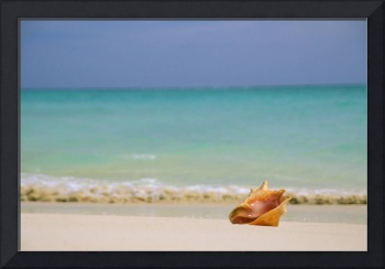 Conch Shell Along Shoreline,  Turquoise Ocean In B