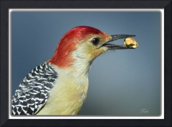 My Favorite ~~ The Red-bellied Woodpecker