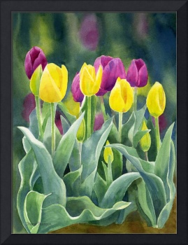 Yellow and Red Violet Tulips dark background