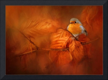 ROBIN RED BREAST IN AUTUMN
