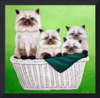 basket of himalayan kitties