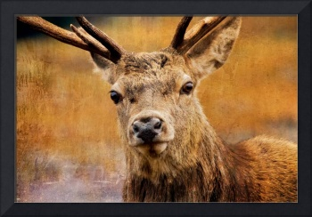 Deer On Canvas