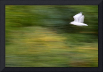 Speed in Flight