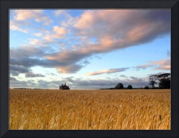 Barley Field Skyline