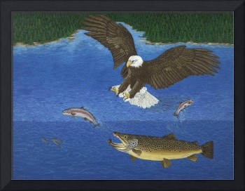 Fine Art Prints Brown Trout Eagle Fish Hunting