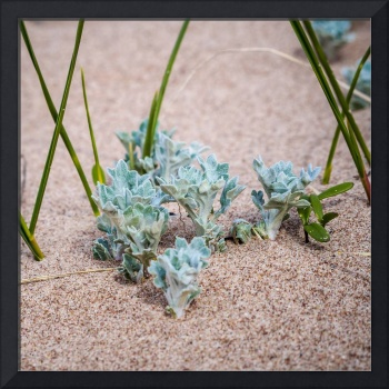 Growing on the sand