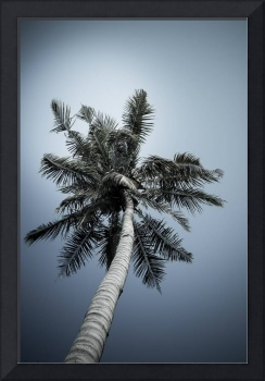 one coconut tree