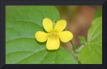 tiny yellow flower
