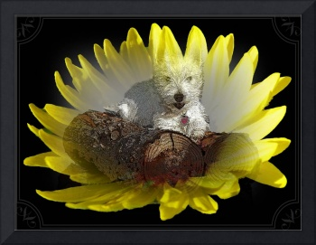Miss Daisy In A Flower