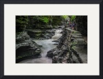 Stream at Watkins Glen New York by D. Brent Walton