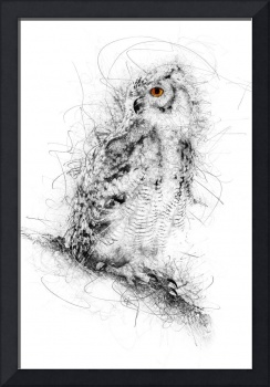 Owl Sketch