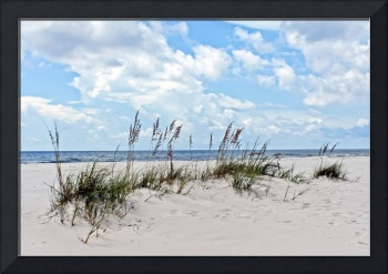 Sea Oats and Sand Dunes 2