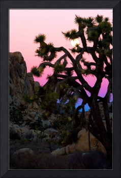 Joshua Tree sunset #1
