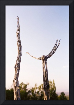 Cholla Cactus Reaching For The Sky