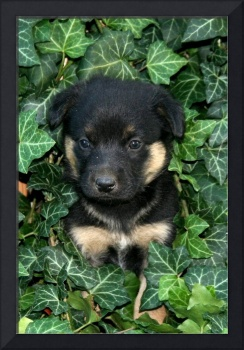 puppy in ivy