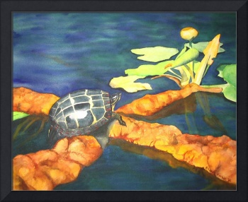 Painted Turtle watercolor