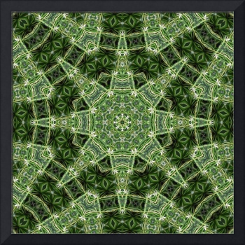 Spider Plant Kaleidoscope Art 3