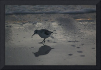 bird on florida beach
