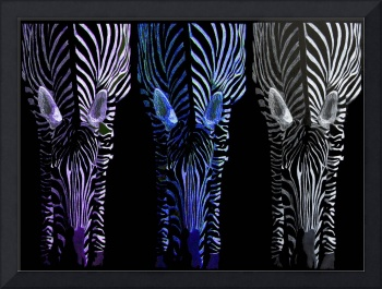 Cool Color Zebra Trio