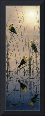 Morning Call - Yellow Headed Blackbirds