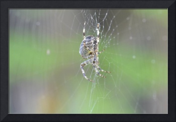 Brown On A Web