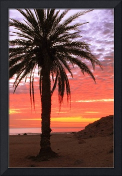Palm Tree and Dawn Sky, Cabo San Lucas Mexico