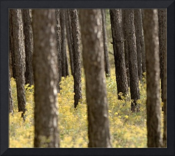 Yellow Flowers and Tree Trunks
