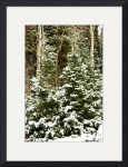 Kaibab Forest Snowfall by Jacque Alameddine