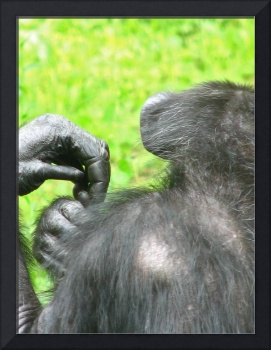 The Hand of A Primate
