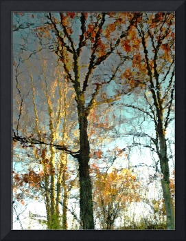 Oak And Birch Tree Reflections