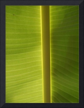 Banana Leaf, Dominica