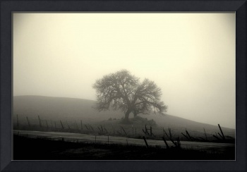Lonely Tree - Tinted