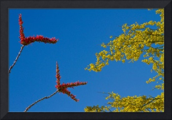 Ocotillo and Palo Verde Blooms Waving in the Wind