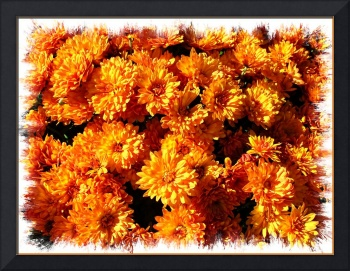 Fall Autumn Season,Orange Mums,Flower Botany,Frame