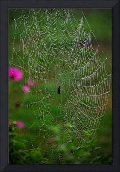 Spider Web in the Morning