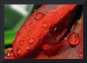 red flower and drops