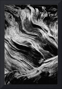 Abstract tree - black and white