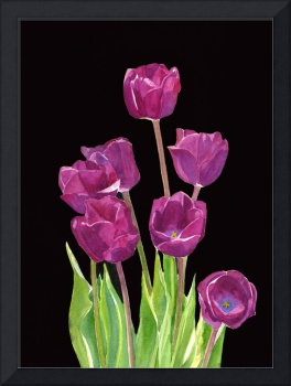 Red Violet Tulips with Black Background