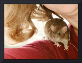 Pet Rat on Red
